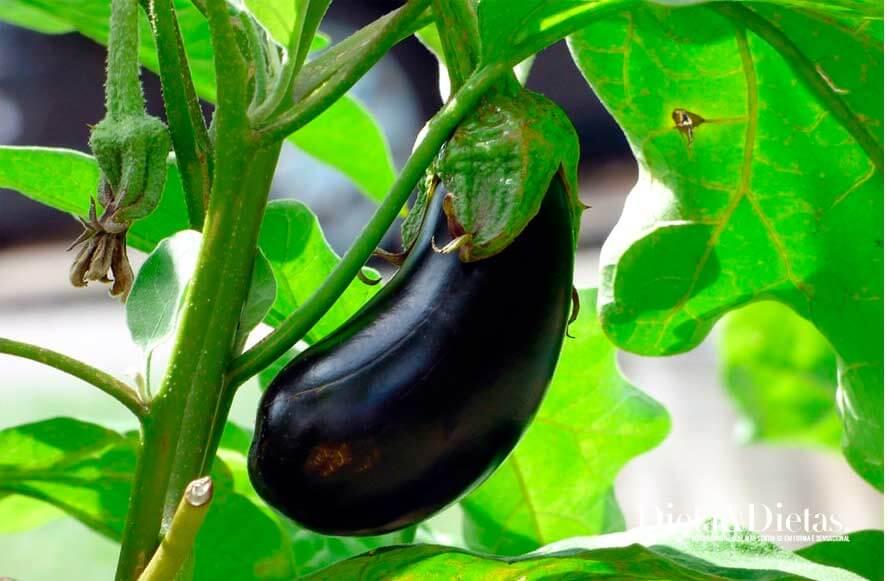 Conheça as vitaminas, fibras e minerais da berinjela