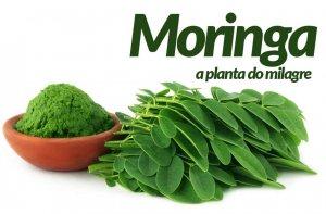 Moringa: Saiba quais são os Benefícios, Indicações e como Consumir!