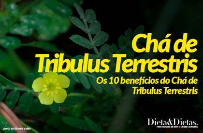 Benefícios do Chá de Tribulus Terrestris